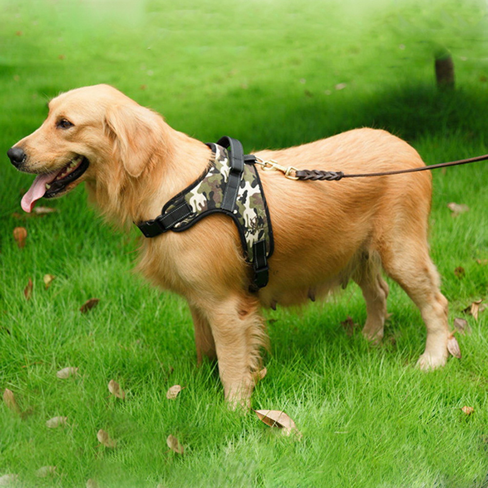 hot heavy duty dog harness padded extra big large medium small dog harness m3 ebay. Black Bedroom Furniture Sets. Home Design Ideas